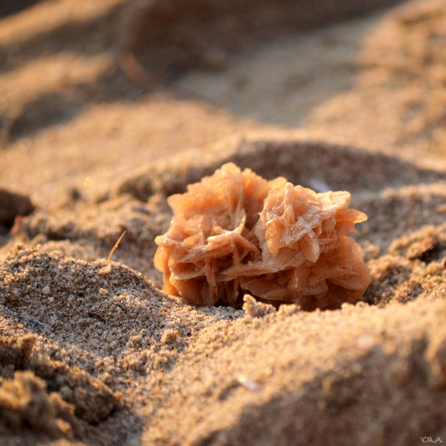 Have you spotted the desert rose in Qatar? | Qatar Living