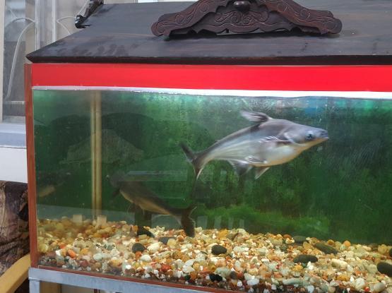 aquarium with fish for sale