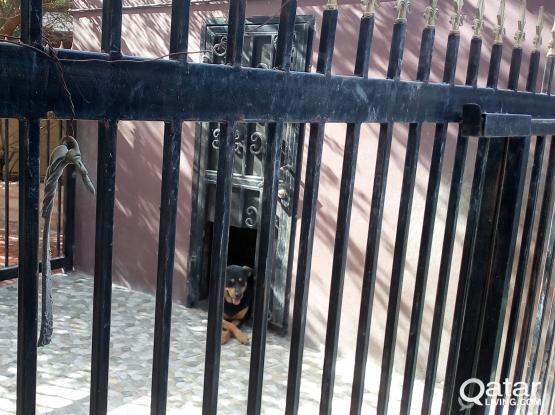Dog Hotel / Sitter
