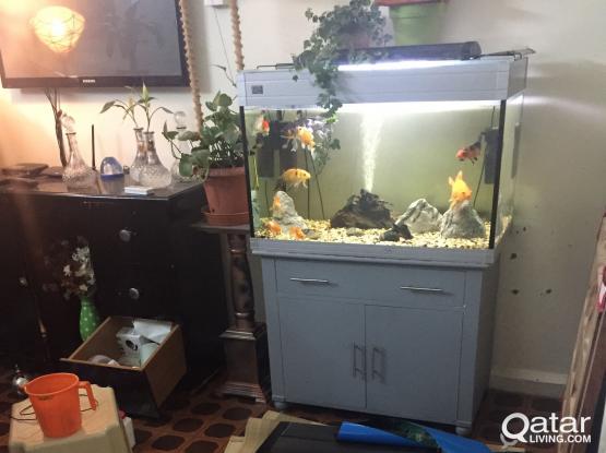 Aquarium fixing maintenence