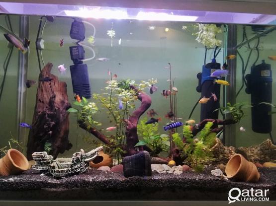 Aquarium services cleaning