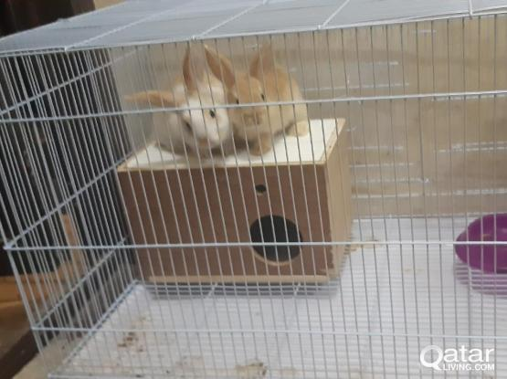 Nice Rabbits with big nest for sale