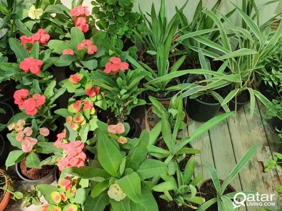 Outdoor Evergreen & Seasonal Plants  Offers Available