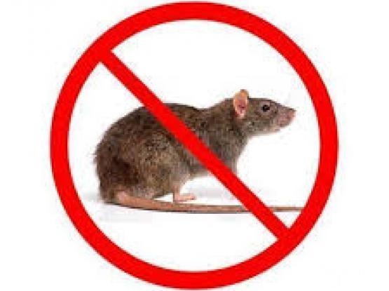 rodent control qatar
