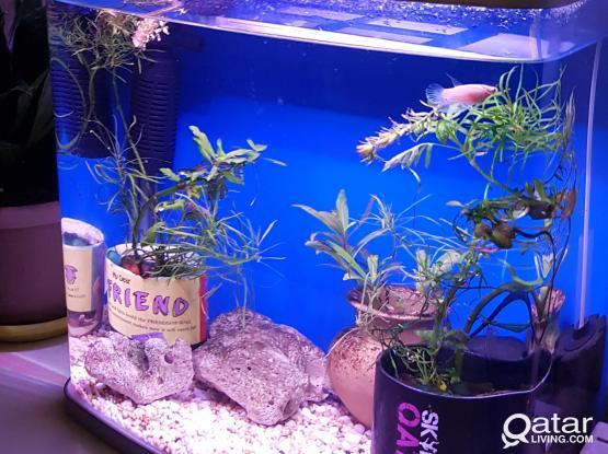 Beautiful Aquariums for sale