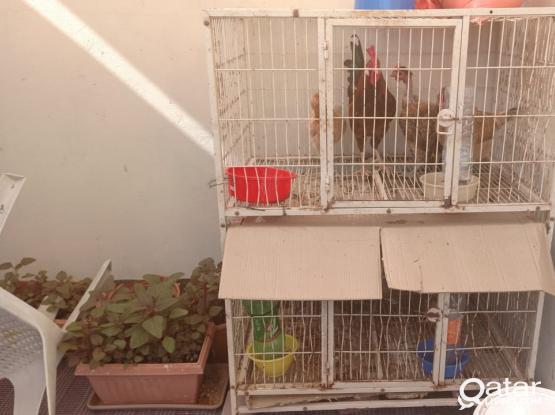 Metal cage for multi purpose