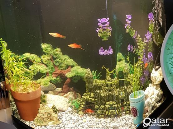 Beautiful Huge Aquarium 150L