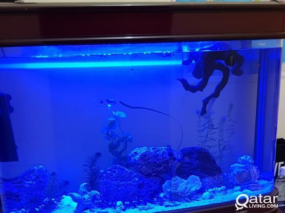Big Aquarium for sale....2nos
