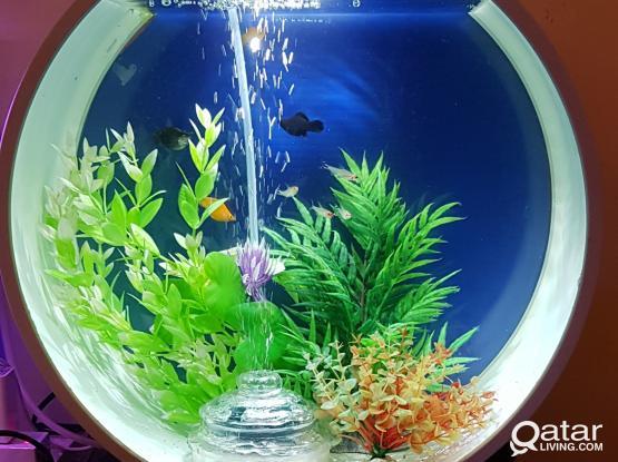 Beautiful Aquarium for sale...