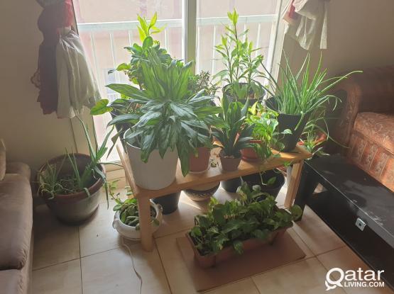 Indoor Plants & Wardrobe  for Sale
