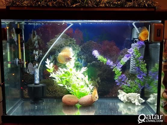 Discuss fishes along with Aquarium