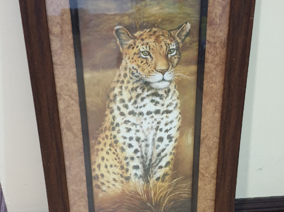 Framed animal pictures