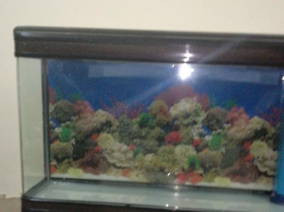 250 Liter Minijiang Aquarium Fish Tank for sale
