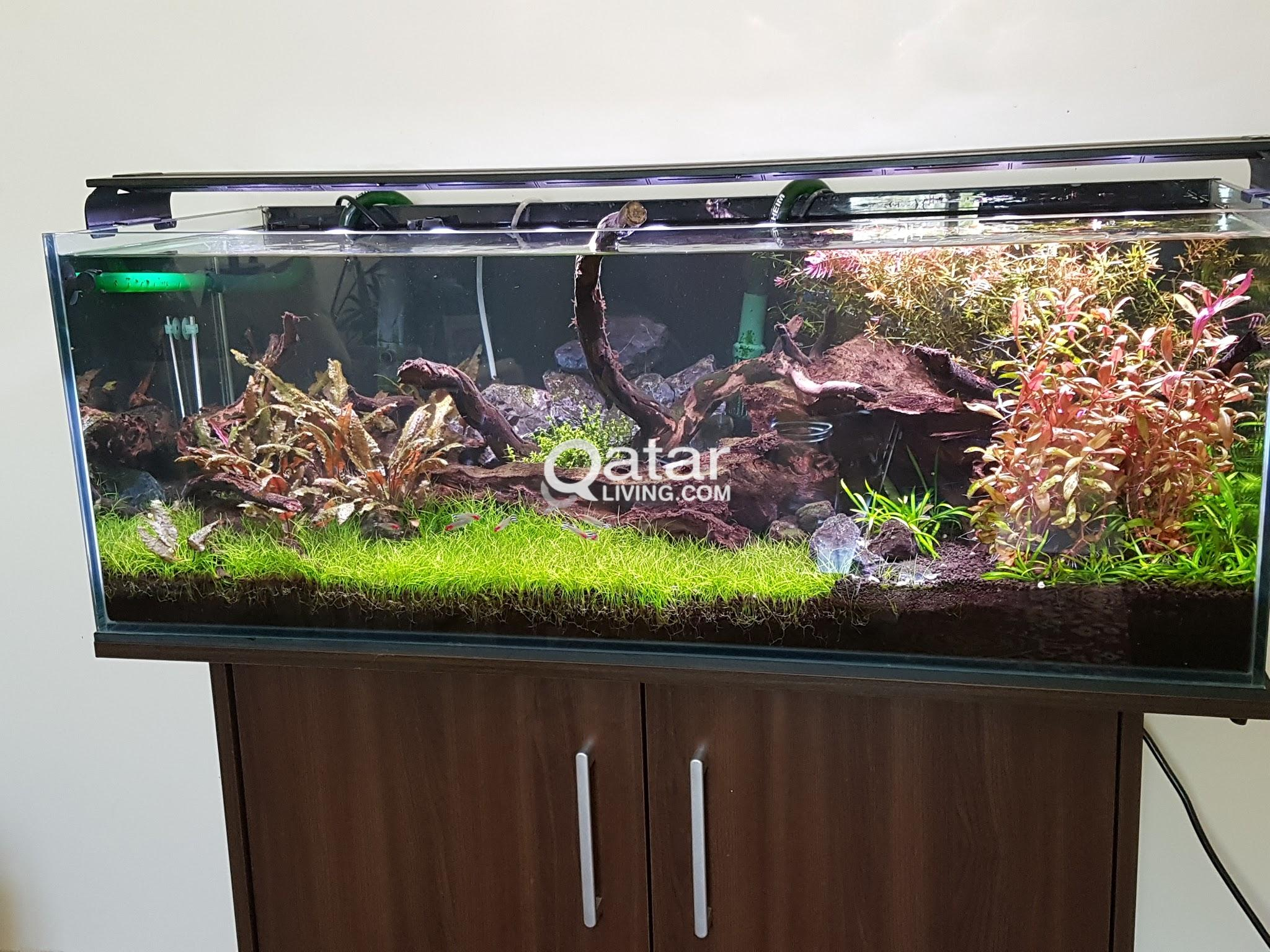 Planted Freshwater Aquarium Fish Tank 38 Gallon Complete Package Highest Grade Equipment Gorgeous Setup Qatar Living