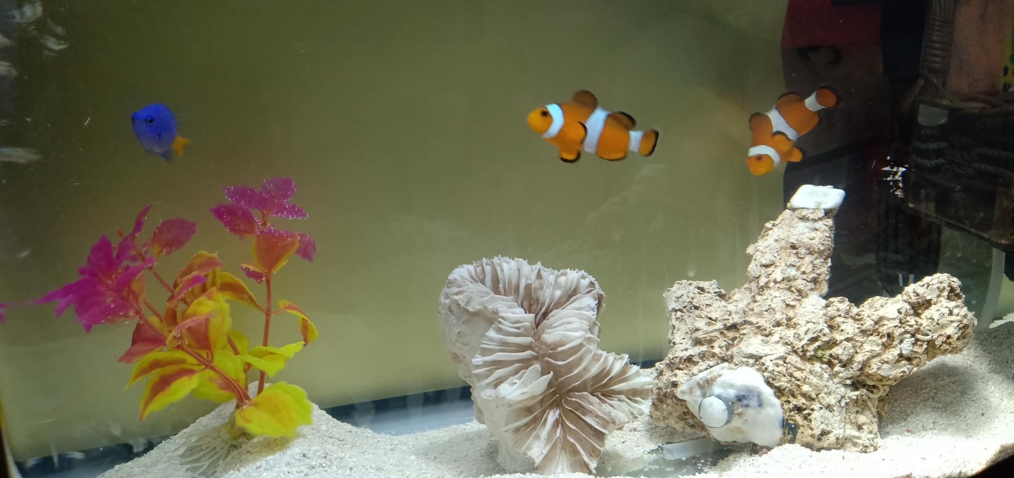 Aquarium Saltwater fish tank 550