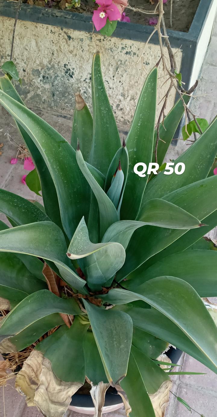 Beautiful outdoor/indoor green plants for sale