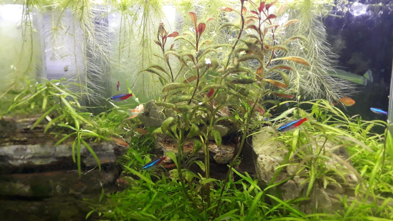 live plants for Fish Aquarium